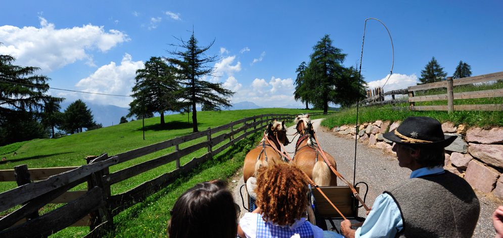 trip with the carriage Dolomiti horse San Genesio Salto